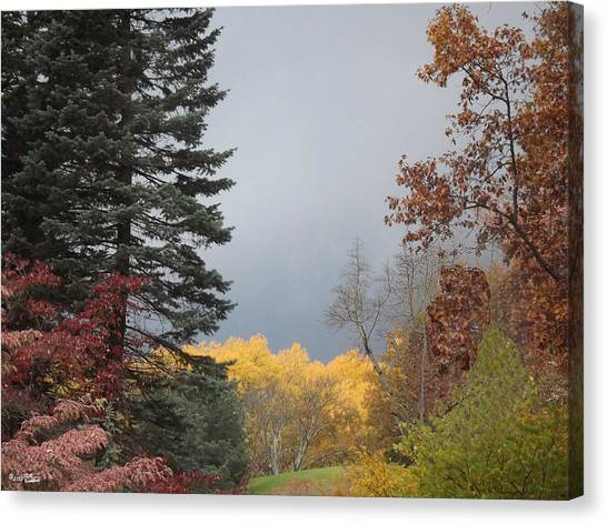 Storm In Hidden Gardens Canvas Print