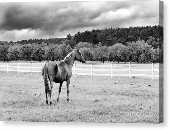 Stormy Pasture Canvas Print