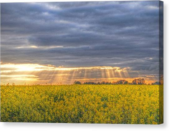 Prairie Sunsets Canvas Print - Stormy Sunset Over Rapeseed Fields by Gill Billington