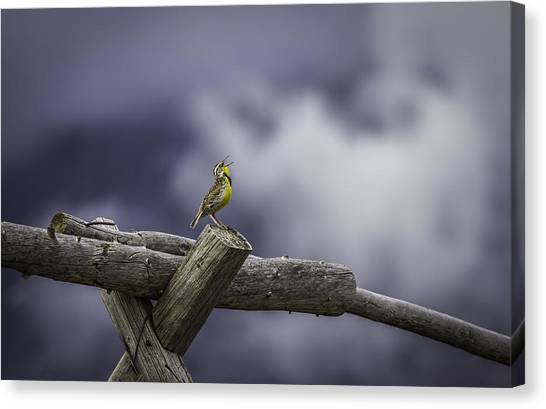 Meadowlarks Canvas Print - Stormy Weather And A Sweet Song by Thomas Young
