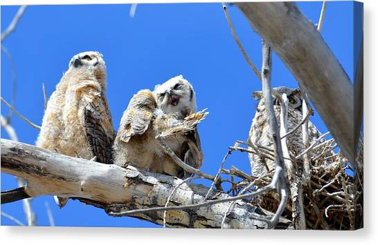 Story Time For The Owlets Part 5 Canvas Print