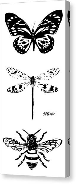 Straighten Up And Fly Right Canvas Print by Amanda  Sanford