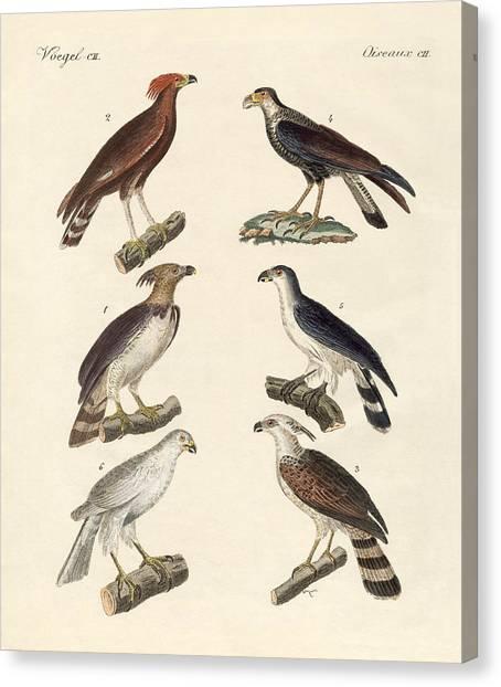 Harpy Eagle Canvas Print - Strange Eagles by Splendid Art Prints