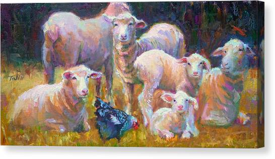 Stranger At The Well - Spring Lambs Sheep And Hen Canvas Print