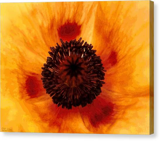 Straw Poppy Canvas Print