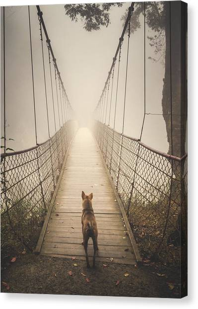 Stray Dog Canvas Print