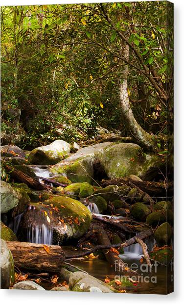 Stream At Roaring Fork Canvas Print