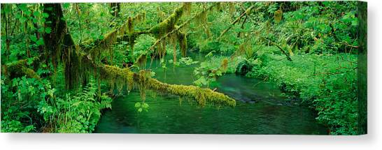 Olympic National Park Canvas Print - Stream Flowing Through A Rainforest by Panoramic Images