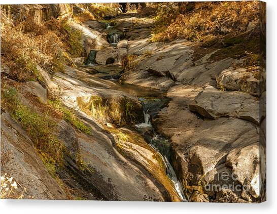 Stream In The Sierras  1-7828 Canvas Print by Stephen Parker