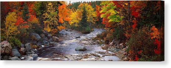 Nova Scotia Canvas Print - Stream With Trees In A Forest by Panoramic Images