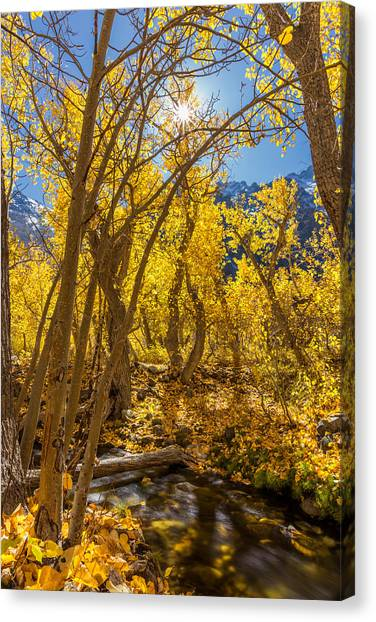 Streams Of Gold Canvas Print