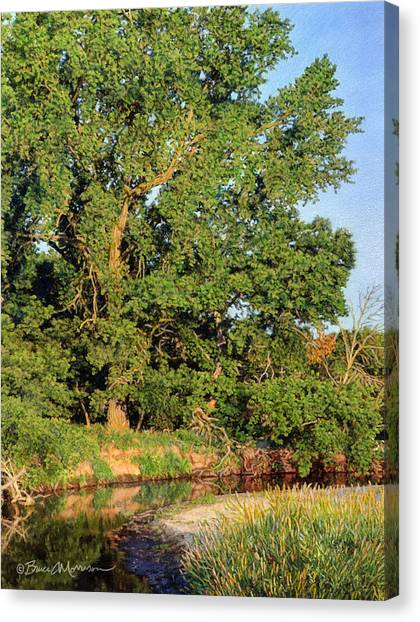 Streamside Cottonwood Canvas Print