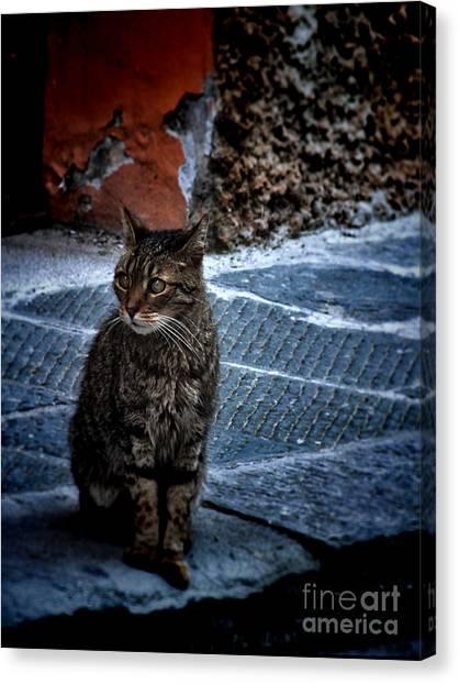 Street Cat Canvas Print