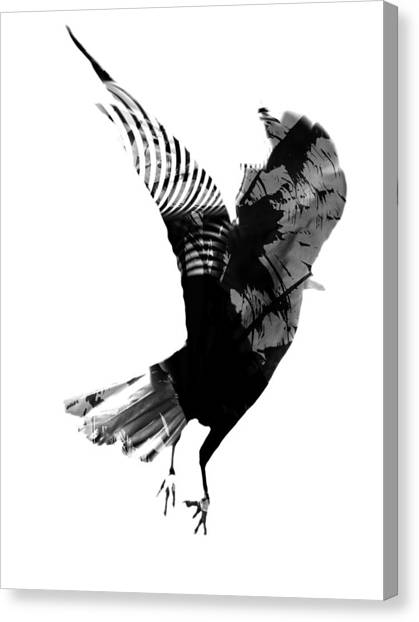 Street Crow Canvas Print