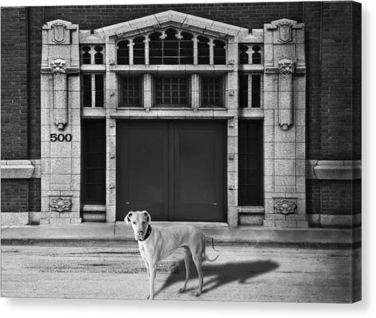 Street Dog Canvas Print by Larry Butterworth