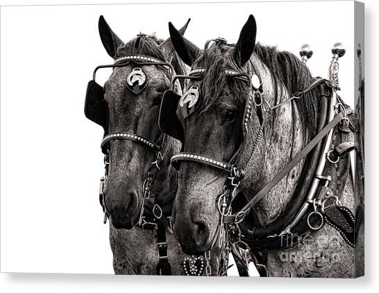 Draft Horses Canvas Print - Strength by Olivier Le Queinec