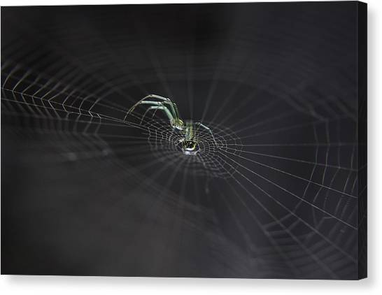 Spiders Canvas Print - Strings Of Existence II by Toni Minchev