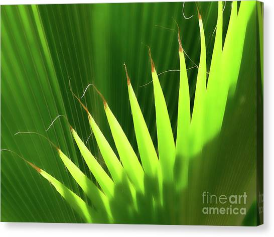 Stringy Palm Canvas Print