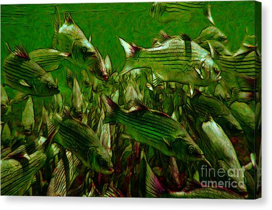 Striped Bass - Painterly V2 Canvas Print by Wingsdomain Art and Photography