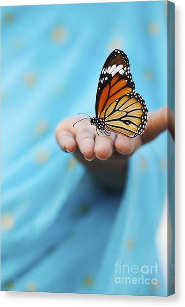 Butterflies Canvas Print - Striped Tiger Butterfly by Tim Gainey