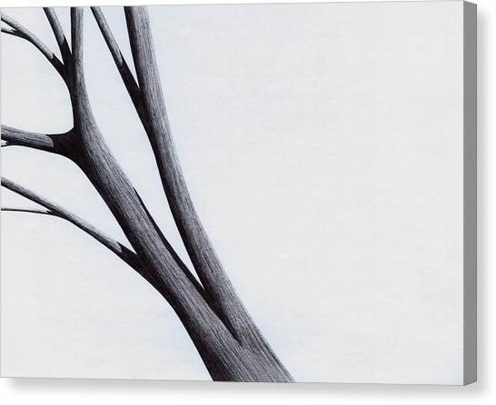 Strong Branches Between Light Canvas Print