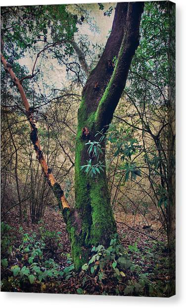 Redwood Forest Canvas Print - Strong Enough To Hold You by Laurie Search