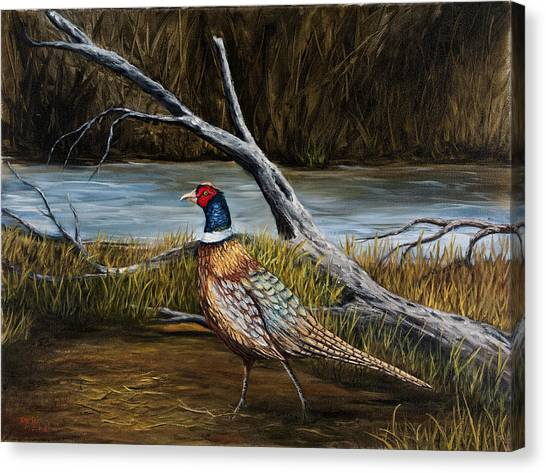 Strutting Pheasant Canvas Print
