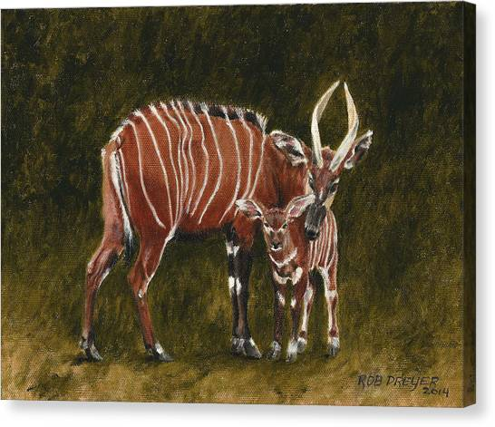 Bongos Canvas Print - Study Of A Mountain Bongo by Dreyer Wildlife Print Collections