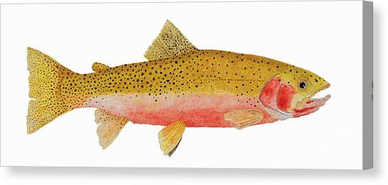 Study Of A Westslope Cutthroat Trout Canvas Print