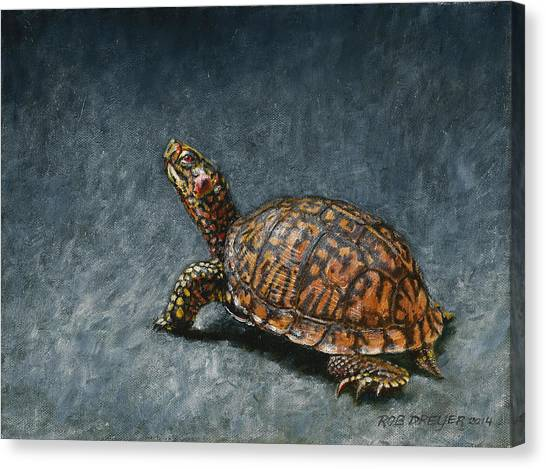 Tortoises Canvas Print - Study Of An Eastern Box Turtle by Dreyer Wildlife Print Collections