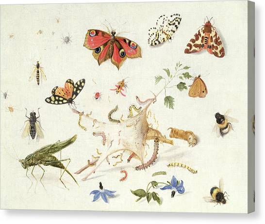 Cricket Canvas Print - Study Of Insects And Flowers by Ferdinand van Kessel