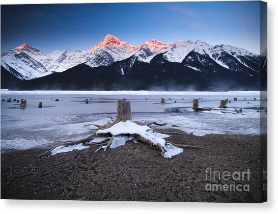 Stumps At Spray Lakes Canvas Print by Ginevre Smith