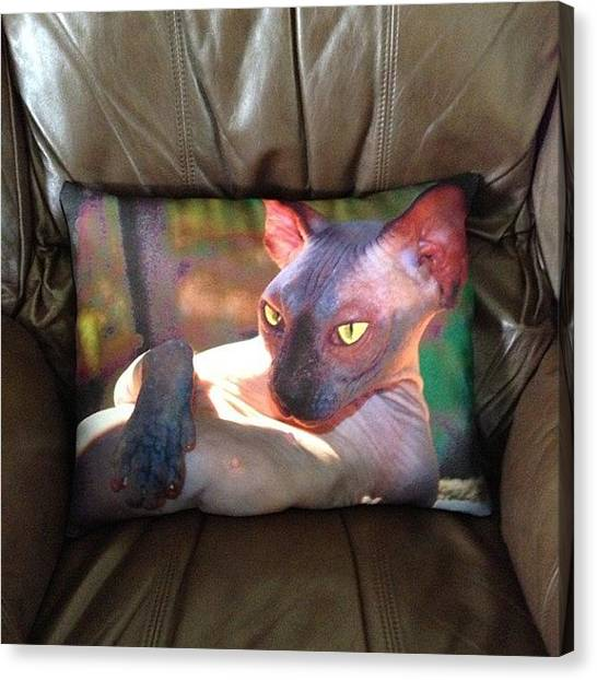 Sphynx Cats Canvas Print - Stunning Cheetie Cat Pillow  #sphynx by Avril O
