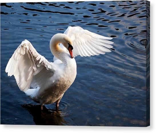 Stunning Swan Canvas Print