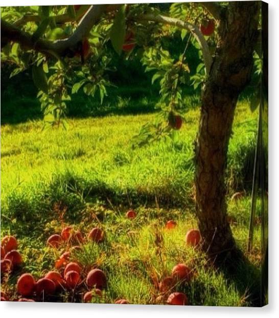 Massachusetts Canvas Print - Sturbridge, Ma.  #autumn #bestoftheday by Joann Vitali