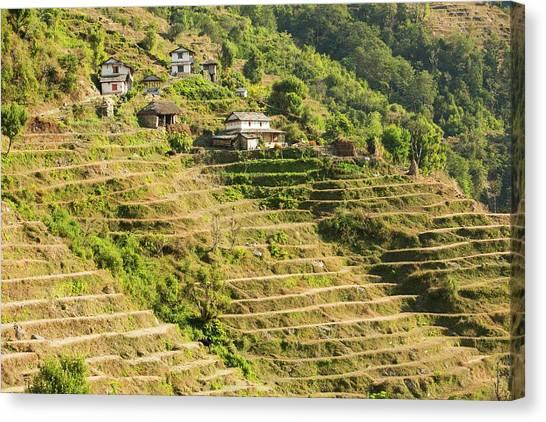 Himalayas Canvas Print - Subsistence Farming by Ashley Cooper