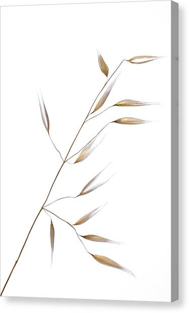 Grass Canvas Print - Subtle Delicateness by Shogun