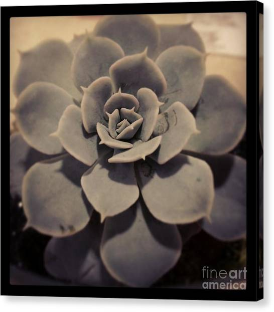 Succulent Canvas Print by Heather L Wright