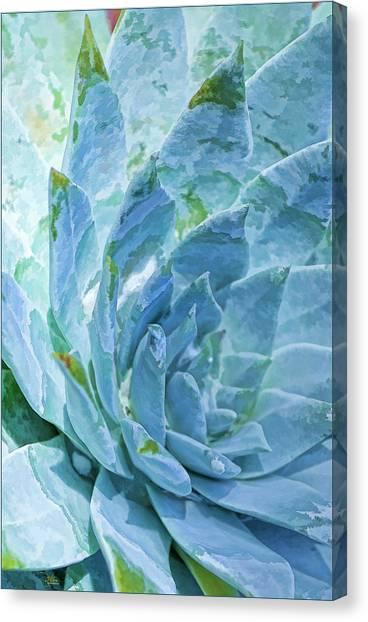 Succulent Swirl Canvas Print