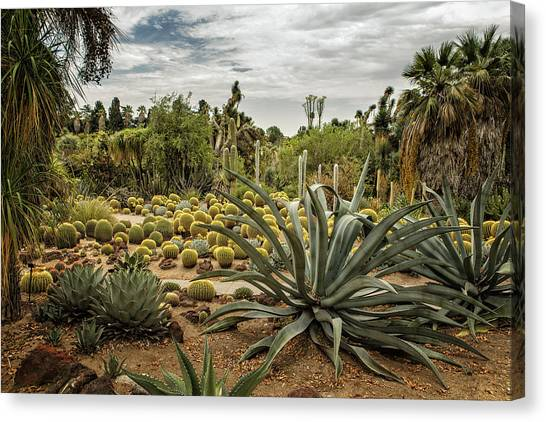 Canvas Print featuring the photograph Succulents At Huntington Desert Garden No. 3 by Belinda Greb
