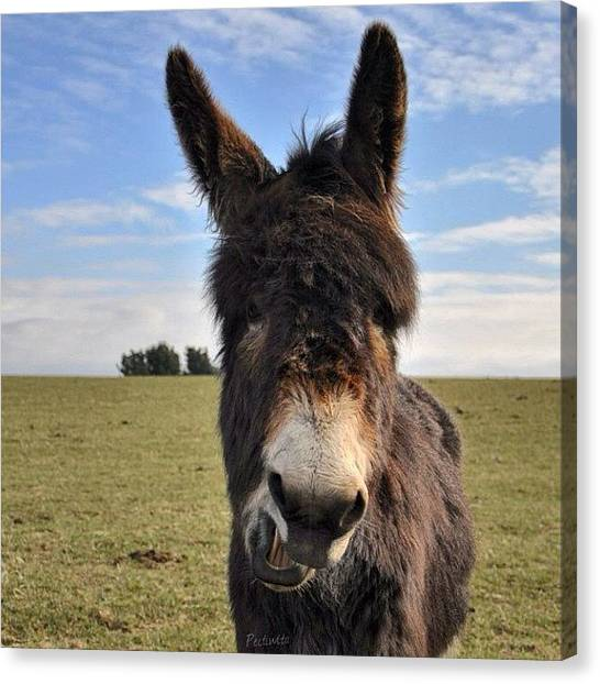 Donkeys Canvas Print - Such A Beautiful Day Today, I Went For by Deb Maciver