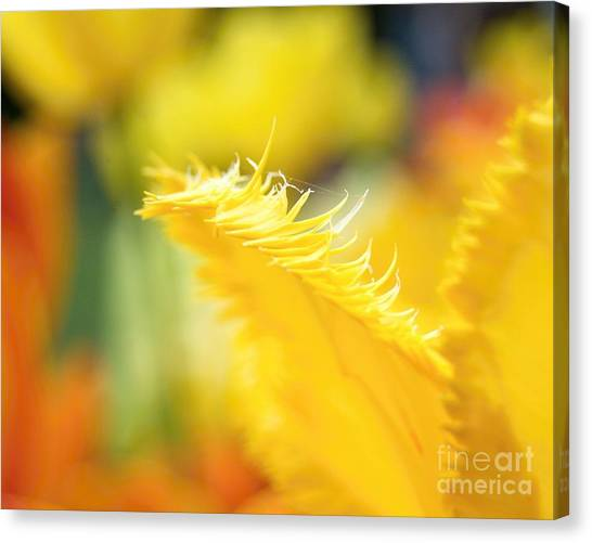 Such A Perfect Day Canvas Print