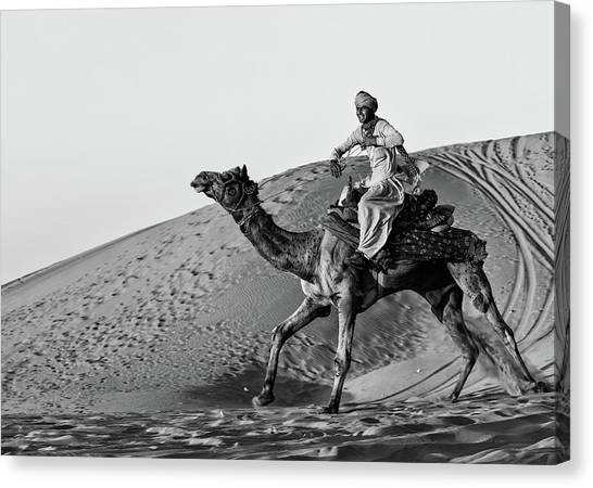 Camels Canvas Print - Such Fun by Susan Moss