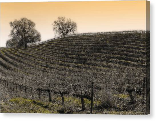 Suisun Valley Vinyards Canvas Print