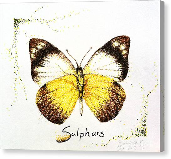 Sulphurs - Butterfly Canvas Print