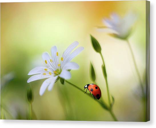 Ladybugs Canvas Print - Summer Beauties by Mandy Disher