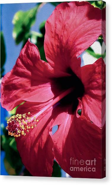 Summer Bloom Canvas Print
