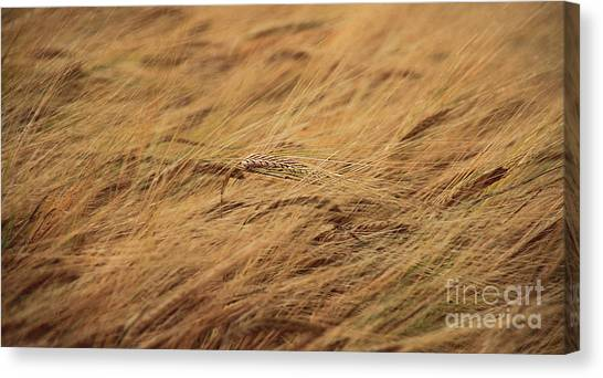 Summer Breeze Canvas Print by Peter Skelton
