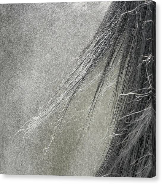 Abstract Horse Canvas Print - Summer Breeze by Piet Flour