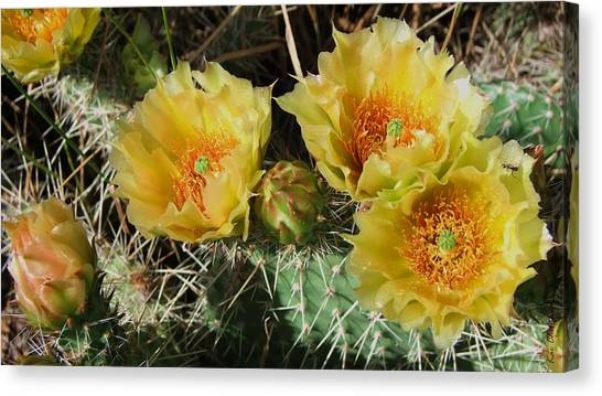 Summer Cactus Blooms Canvas Print